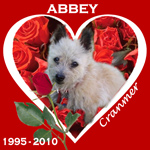 In Memory of Abbey