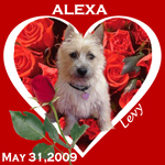 In Memory Of Alexa