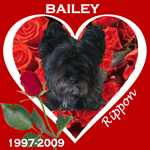 In Memory of Bailey