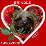 In Memory of Brindle