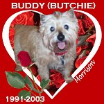 In Memory of Buddy (Butchie)