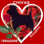 In Memory of Chivas