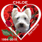In Memory of Chloe