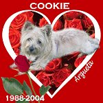 In Memory of Cookie
