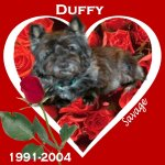 In Memory of Duffy