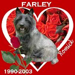 In Memory of Farley