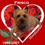 In Memory of Frisco