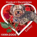 In Memory of Harley