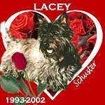 In Memory of Lacey