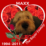 In Memory of Maxx