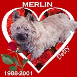 In Memory of Merlin