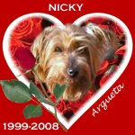 In Memory of Nicky