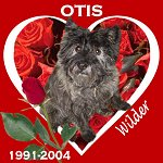 In Memory of Otis