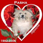 In Memory of Pasha