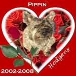 In Memory of Pippin