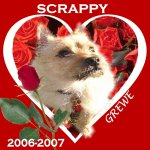In Memory of Scrappy