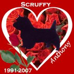 In Memory of Scruffy