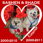 In Memory of Sashen & Shade