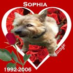 In Memory of Sophia