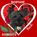 In Memory of Sophie