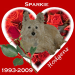 In Memory of Sparkie