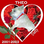 In Memory of Theo