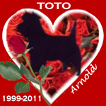 In Memory of Toto
