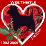 In Memory of Wee Thistle